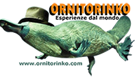 ornitorinko-website-logo